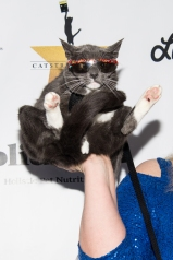 HOLLYWOOD, CA - APRIL 21: 'Sunglasses Cat' attends 'CATstravaganza featuring Hamilton's Cats' on April 21, 2018 in Hollywood, California. (Photo by Emma McIntyre/Getty Images for Kitty Bungalow)